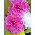image/ty-blog-2006-04-19T20:23:35-1.jpg